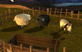 Owcasod
