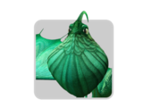 Dragons icon scauldron