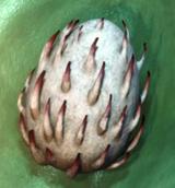 Bewilderbeast Egg
