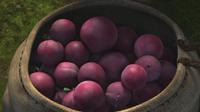 Vanaheim owoc