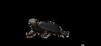 Żółw SoD