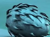 Jajo Oszołomostracha