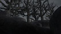 Loki Trees