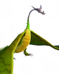 TU-ForestTyphoomerang-Transparent
