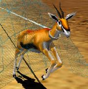 Grant's gazelle