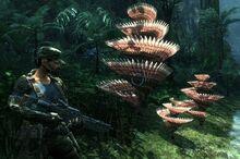 Геликорадиан растение игра
