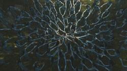 Cérémonie Na'vi