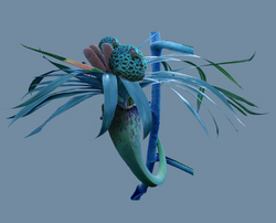 Дактерон растение