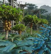 Activités Parc Avatar
