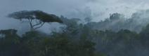 Forêt de Pandora