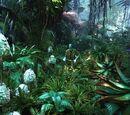 Флора Пандоры
