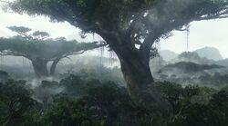 Дерево Дома