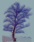 Пальма-бритва Секретный доклад