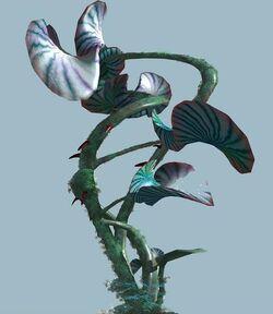 Скрученная лилия растение