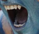 TandenMondNa'vi