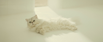 Blofeld's cat (Spectre)