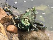 Water Bug 2