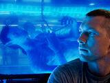 Avatar Program