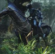 Akwey in the final battle