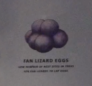 Fan Lizard Eggs