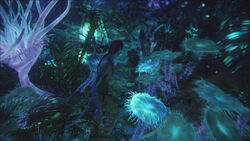 Bioluminescent beauty