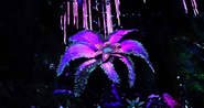 Sun Lily