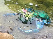 Water Bug 1