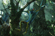 Avatar 13