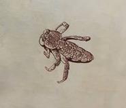 Cerebellis Scapularis