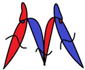 Morphopedian Logo-1-