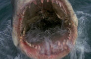 Great White Shark from Jaws 3