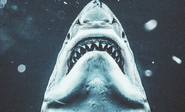 Jaws-poster-shark