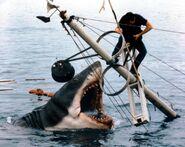 Bruce | Jaws Wiki | FANDOM powered by Wikia