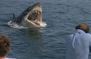 Great White Shark from Jaws 4