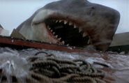 Great White Shark from Jaws 6
