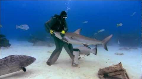 Sharkwater FULL 720p