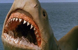 Great White Shark from Jaws the Revenge 1