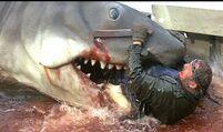 Jaws Quints Death