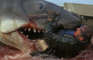 Great White Shark from Jaws 7