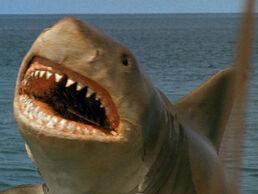 Jaws4Shark