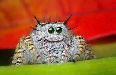 Happy-spider