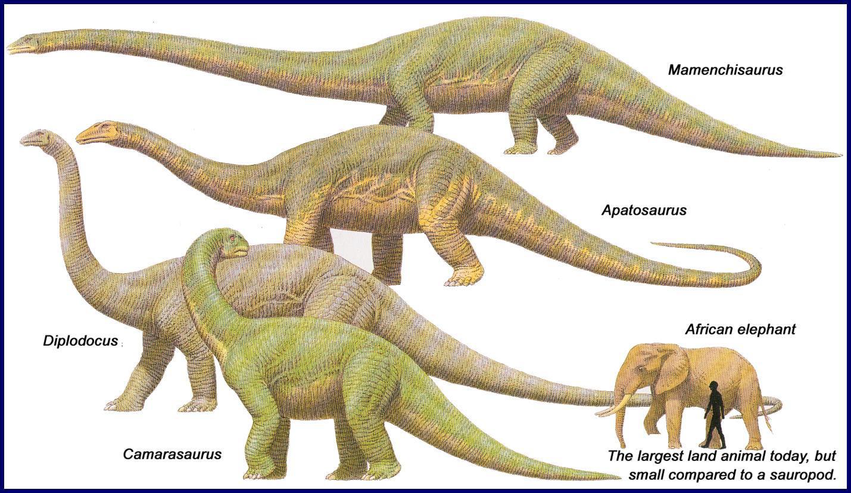 Sauropods | Dinosaur Wiki | FANDOM powered by Wikia