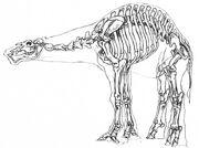Falumpaset Skelett