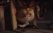 Loth Katze auf Sorgan