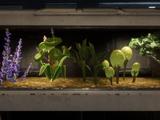 Galaktischer Botanikerwettbewerb