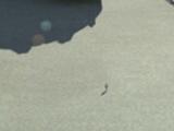 Allterrain-Schwerlastschlepper