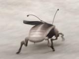 Abafar-Käfer