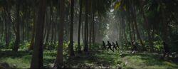 Scarif-Palmenwälder