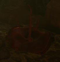 Blutbäuchling