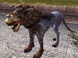 Kath-Hund
